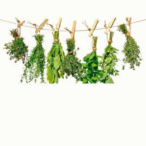 Hierbas – Herbs