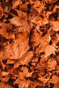 ¿Que significa el otoño espiritualmente?
