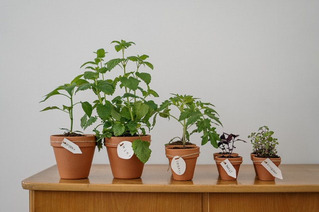 Cada Hierba De Una Botanica jazmín romero
