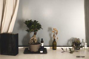 ¿Qué servicios ofrece una Botanica
