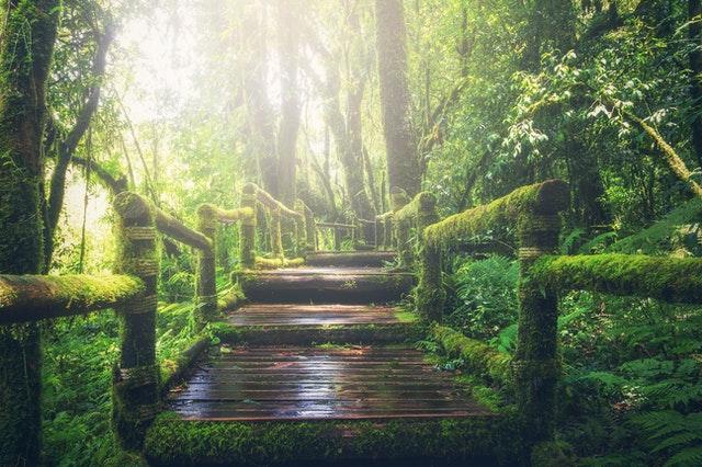 Qué servicios ofrece una Botanica ritual abre caminos